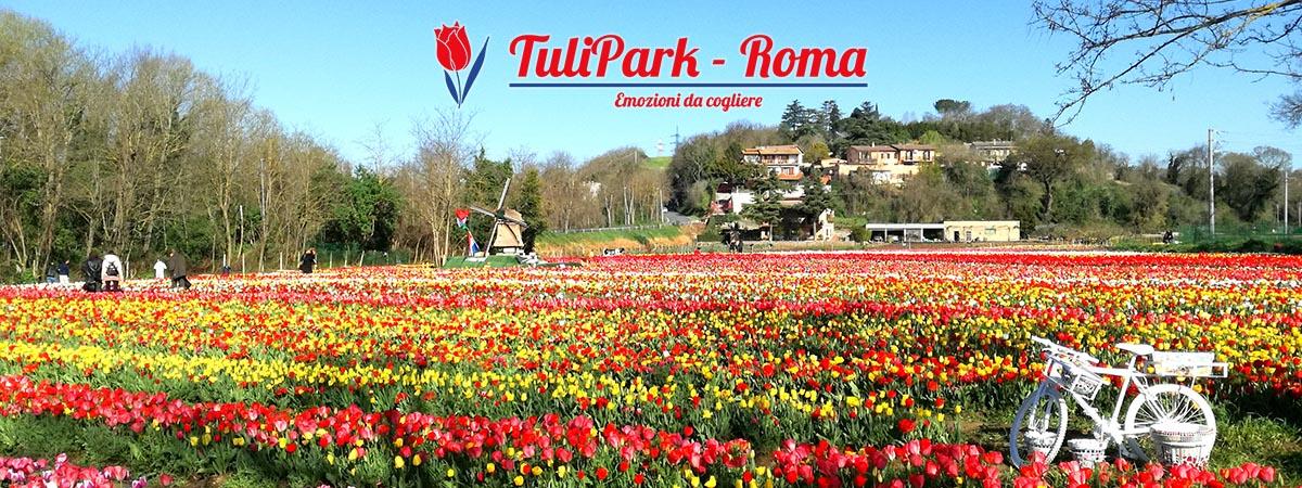 Parco di tulipani a roma