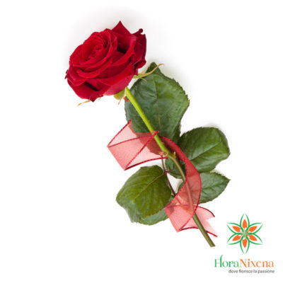 Una rosa rossa